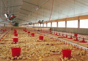 Отопление птицефермы